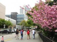 东华大学师范学院延安路校区历年录取分数线