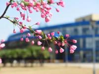 2019年东华大学师范学院延安路校区排名