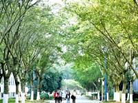 柳州城市职业师范学院2019年招生录取分数线