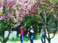 青岛职业技术师范学院历年招生录取分数线